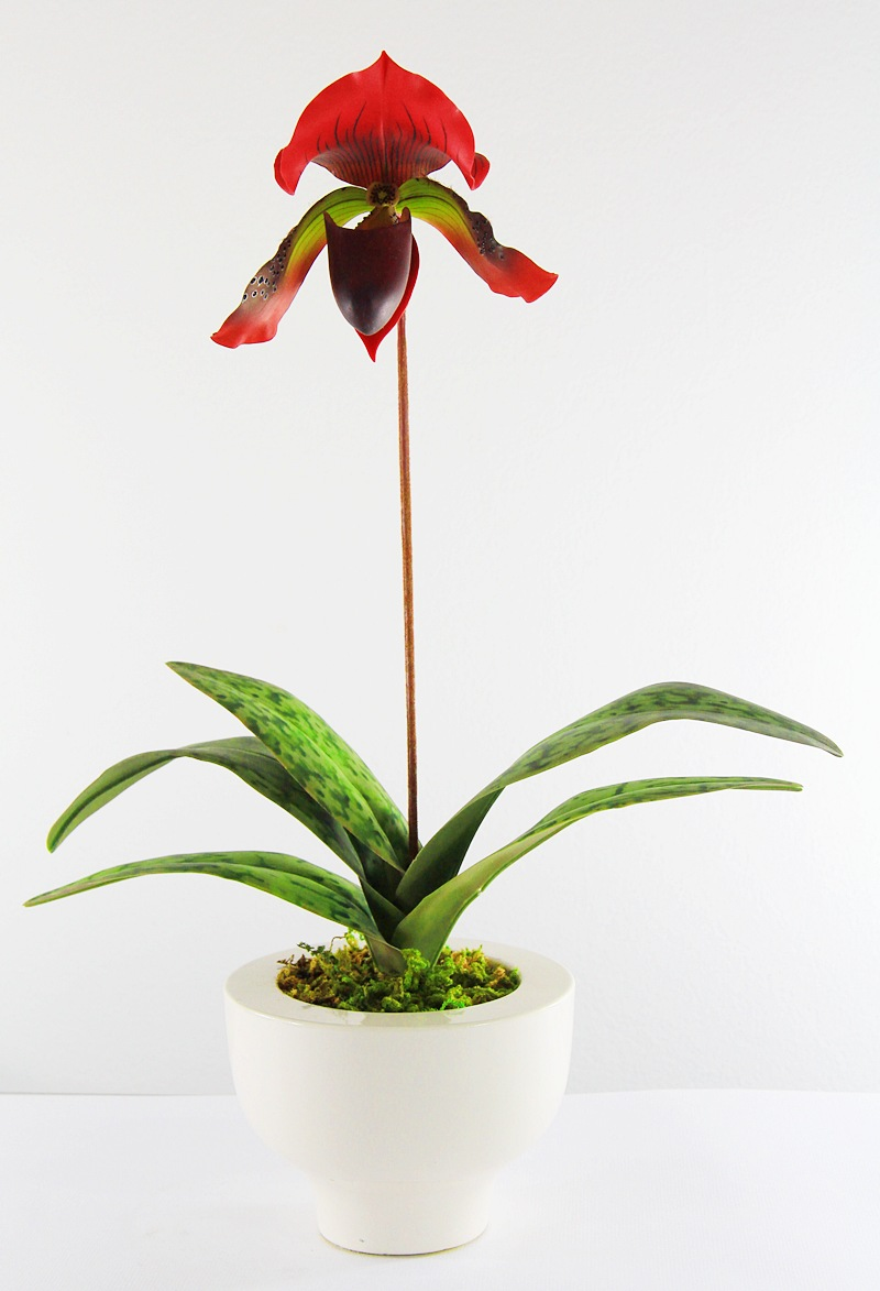 PAPHIOPEDILUM (LADY SLIPPER) CLAY ORCHIDS