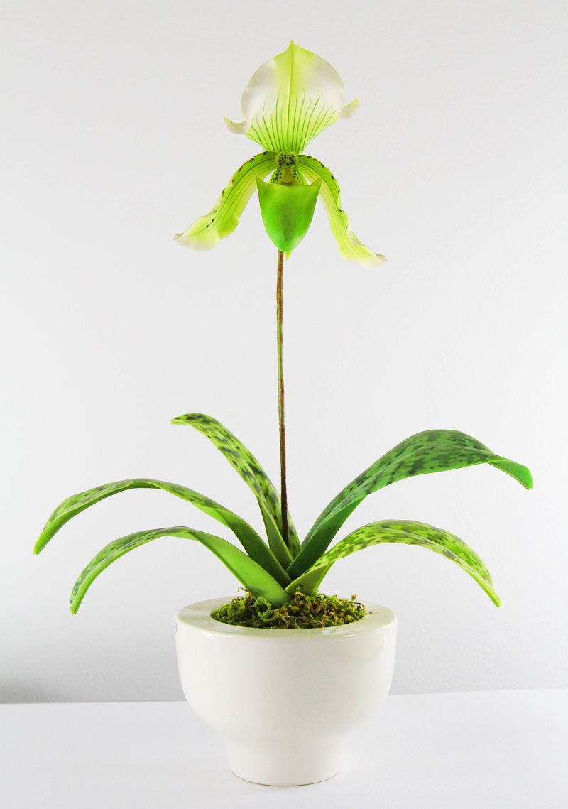 15003 Paphiopedilum Clay flower
