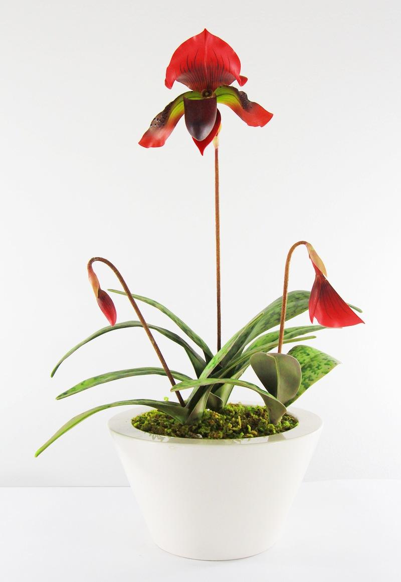 15008 Paphiopedilum Clay flower