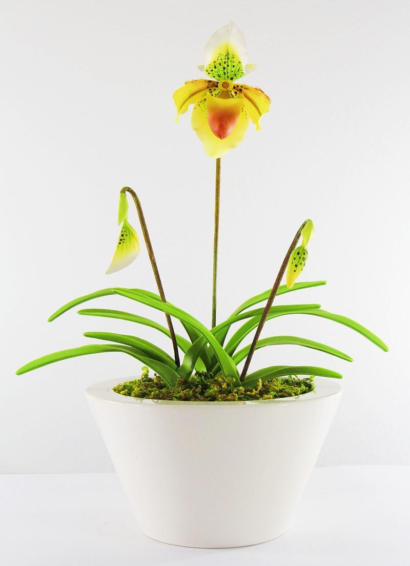 15010 Paphiopedilum Clay flower