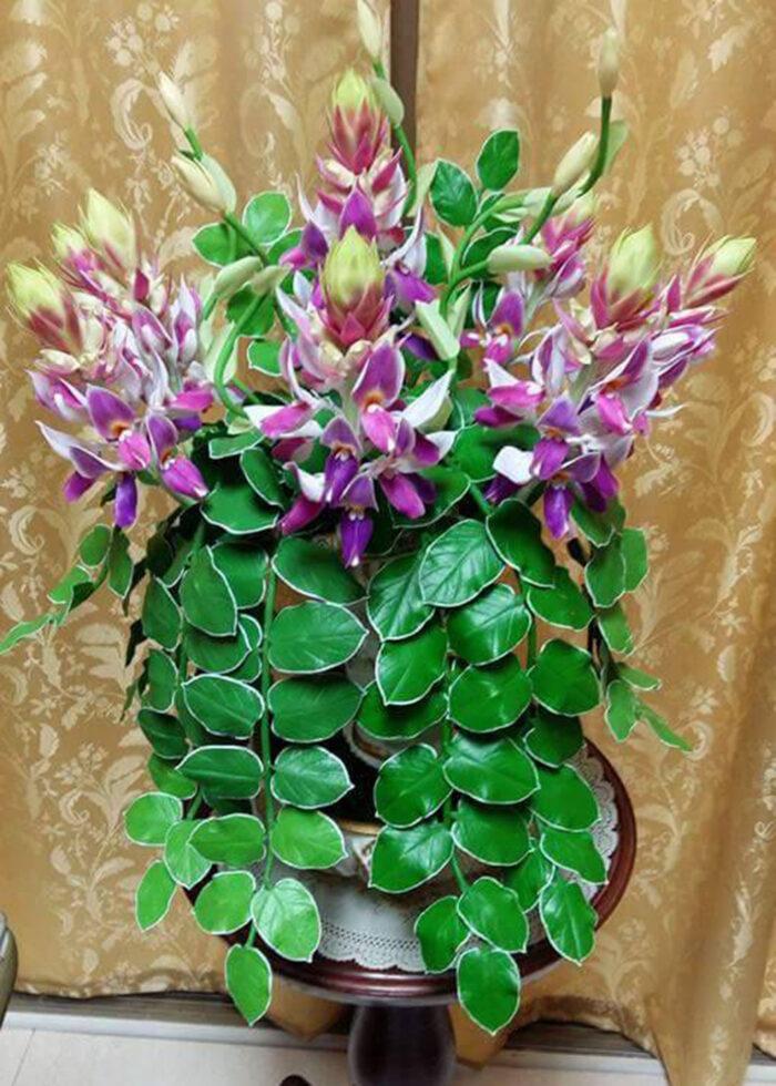 Suttikan Uttamote Clay flower