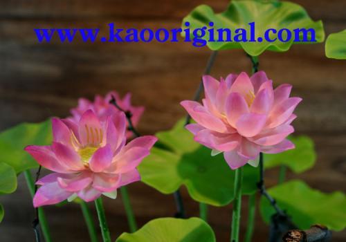1024 Nelumbo nucifera flower (6)
