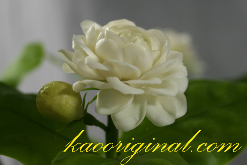 Jasmine flower (1)