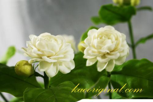 Jasmine flower (2)