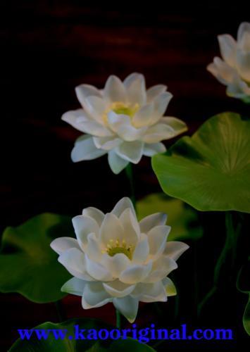 Nelumbo nucifera flower 1025 (12)