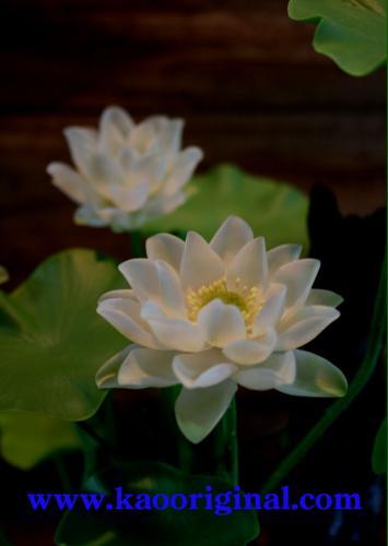 Nelumbo nucifera flower 1025 (13)