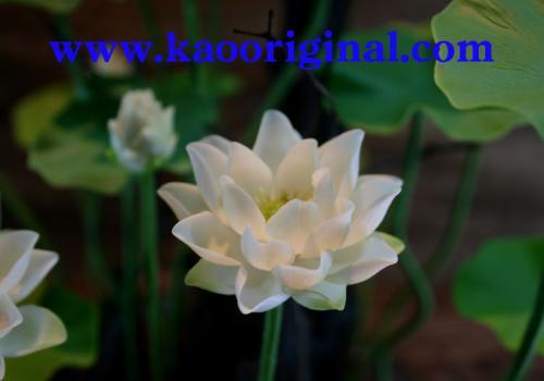Nelumbo nucifera flower 1025 (18)